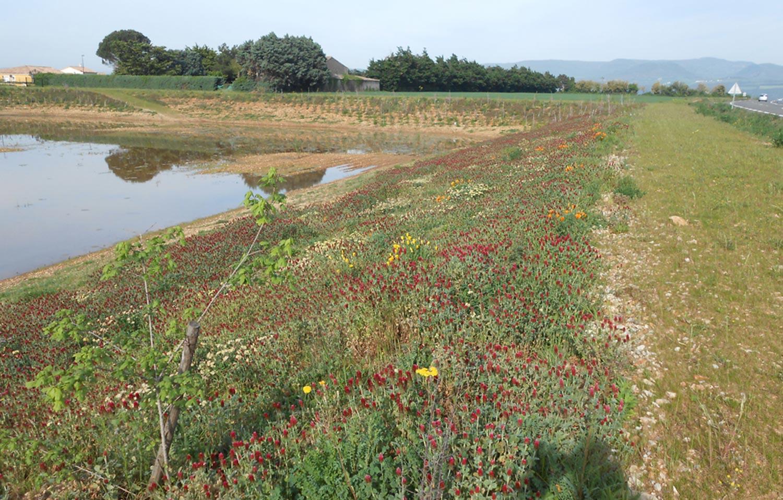 SOLEV intervient dans le domaine du génie écologique et la protection de la biodiversité