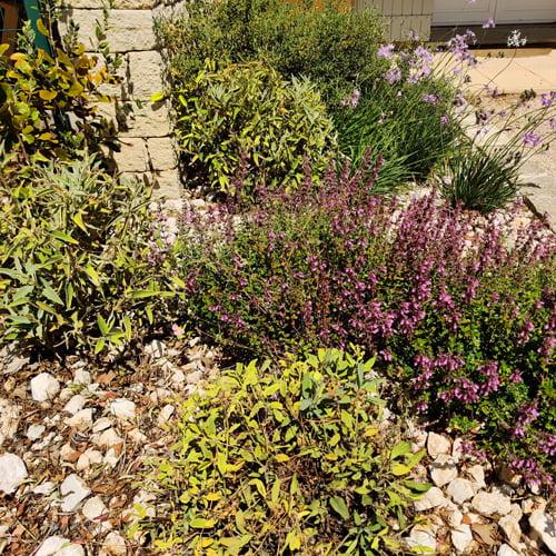 Respectueux de la ressource en eau, SOLEV à Carpentras propose des jardins secs inspirés par l'extraordinaire palette de végétaux méditerranéens.