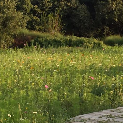 SOLEV à Carpentras et la biodiversité