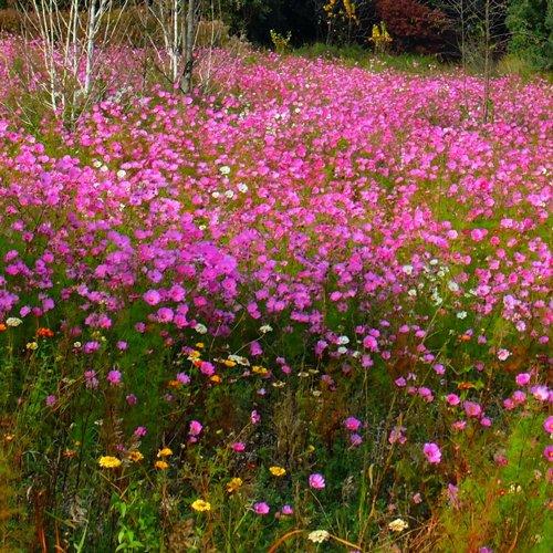 SOLEV à Carpentras et les prairies fleuries