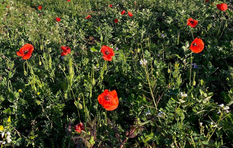 SOLEV à Carpentras, La prairie fleurie, c'est en quelque sorte l'art de la simplicité !