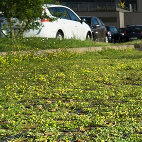 SOLEV vous conseille sur les espèces adaptées à votre parc de stationnement pour professionnels et collectivités