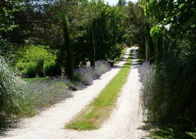Plantation et entretien massifs et allées - Carpentras